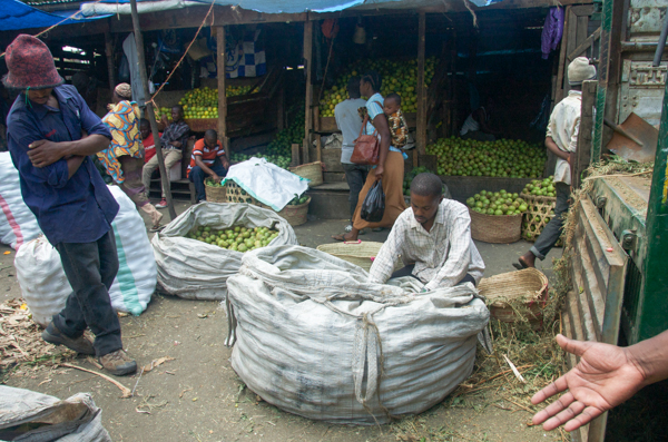 A trader sort mangos at the Kilombero wholesale market in Arusha, Tanzania. Credit: Rachel Cernansky.
