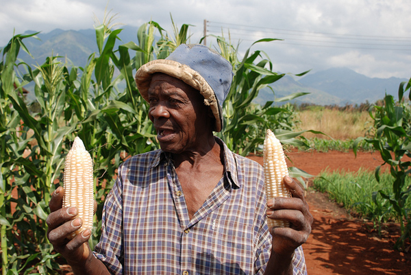 A maize farmer in Morogoro, Tanzania. Credit: Anne Wangalachi/CIMMYT.