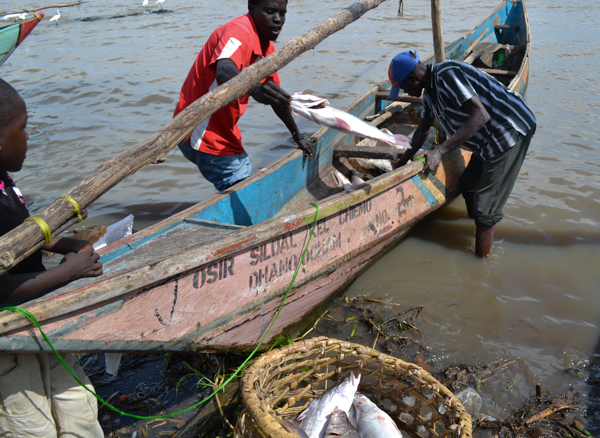 Fishermen unload their catch at Dunga Beach in Kisumu, Kenya. Photo credit: Isaiah Esipisu.