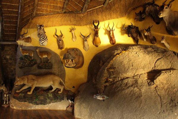 The wall of a hunting outfitter's lodge in Nelspruit, just outside Kruger National Park. Photo credit: Mic Smith.