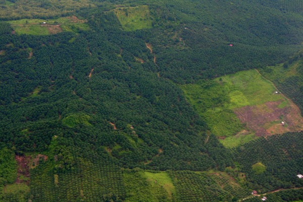 Mature, young, and newly cleared palm oil plantations in the Malaysian state of Sabah on Borneo. Photo credit: Jeremy Hance, Mongabay.com.