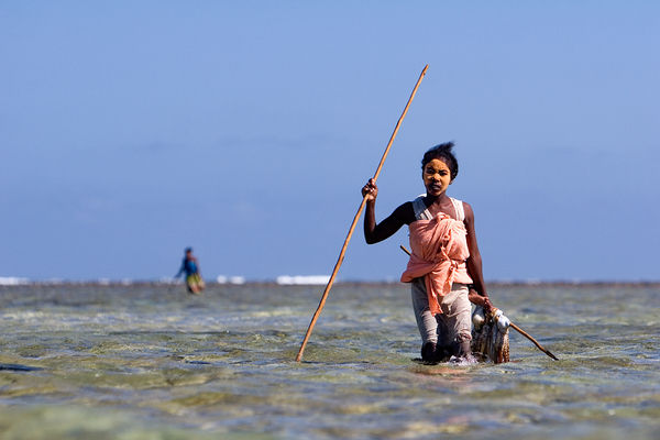 A fisherwoman carries her octopus catch across a reef flat. Photo copyright: Garth Cripps / Blue Ventures 2015.
