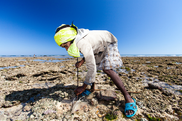 A fisherwoman spears an octopus on a reef flat at low tide. Photo copyright: Garth Cripps / Blue Ventures 2015.
