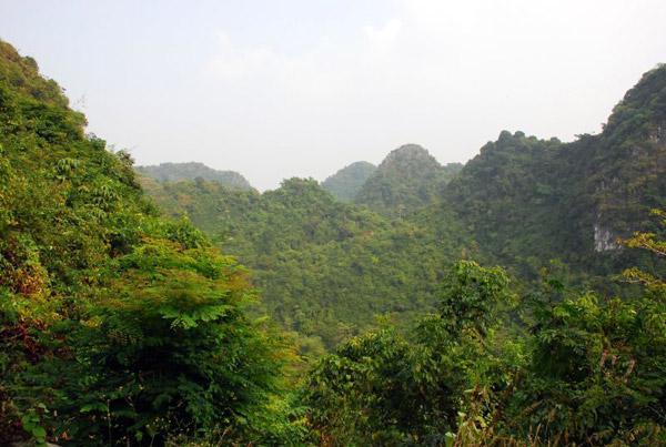 Photo caption: Vietnamese forest landscape. Photo credit: Everjean via Flickr.