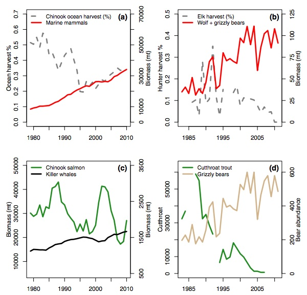 (a): Time series of Chinook commercial fishing harvest and biomass of marine mammals (pinnipeds, resident killer whales) in the Northeast Pacific Ocean. (b): Time series of predator biomass and elk harvest rates on the northern range elk herd of Yellowstone National Park. (c): Time series of ocean abundance of Chinook salmon and their killer whale predators in the Northeast Pacific Ocean. (d): Time series of Yellowstone cutthroat trout, a declining but unprotected species, at Clear Creek in Yellowstone National Park, and grizzly bear abundance in the Greater Yellowstone Ecosystem. Credit: Marshall, K., et al. (2015).