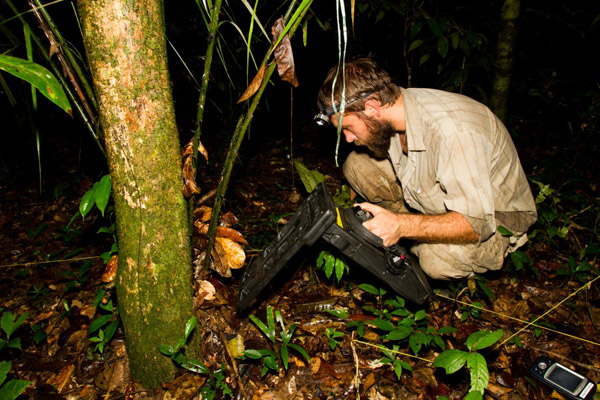 Bed time. Study co-author Ian Warrington, checking the sleeping site of one of the translocated frogs using a harmonic direction finder. Poison frogs are diurnal and they do not move at night. Photo credit: Femoralis Project.
