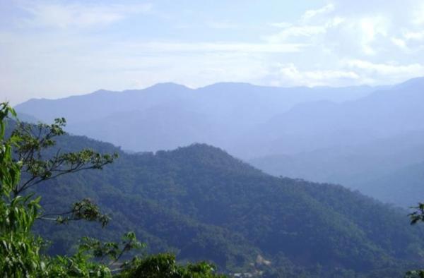Cloud forest habitat within the project's survey area near La Esperanza, Peru. Photo credit: Sam Shanee.