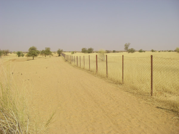A fence in the Gourma region in Mali. Its purpose is unknown. Photo by Jake Wall.