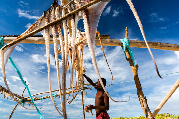 A fisherman dries octopus for local consumption on a remote Madagascar island.  Photo copyright: Garth Cripps / Blue Ventures 2015.