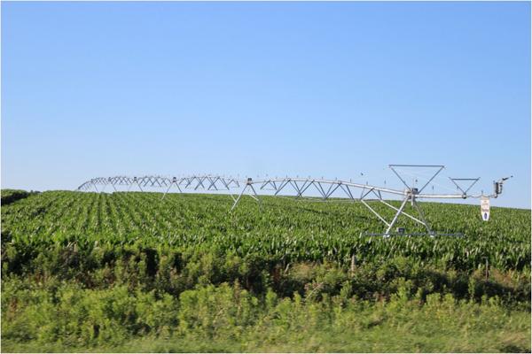 Cornfields in Kansas. Photo credit: David Gonthier.