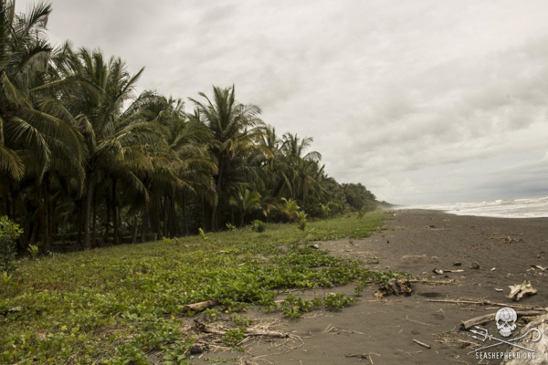 Sea turtle nesting grounds on Pacuare Beach, Costa Rica, where poachers attacked conservationists late last month. Photo credit: Sea Shepherd/Eva Hidalgo.