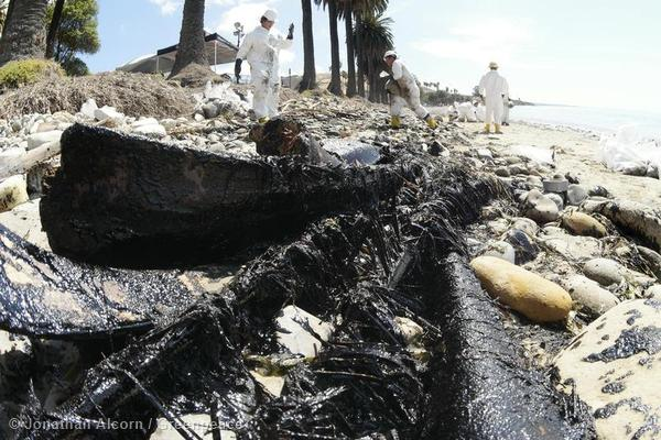 Oil-soaked palm fronds lie on Refugio State Beach on Wednesday, May 20, 2015. Photo credit: Jonathan Alcorn/Greenpeace.