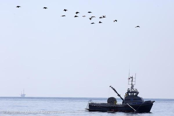 Sea birds fly over the Ocean Sentinel, an oil spill response vessel just off Refugio State Beach on Wednesday, May 20, 2015. An offshore oil platform sits in the distance. Photo credit: Jonathan Alcorn/Greenpeace.